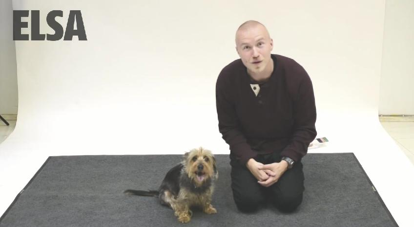 Magician And Voice Actor Team Up To See How Dogs React To Human Barking