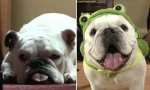 dogs turtle costume