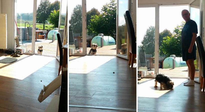 dog glass door