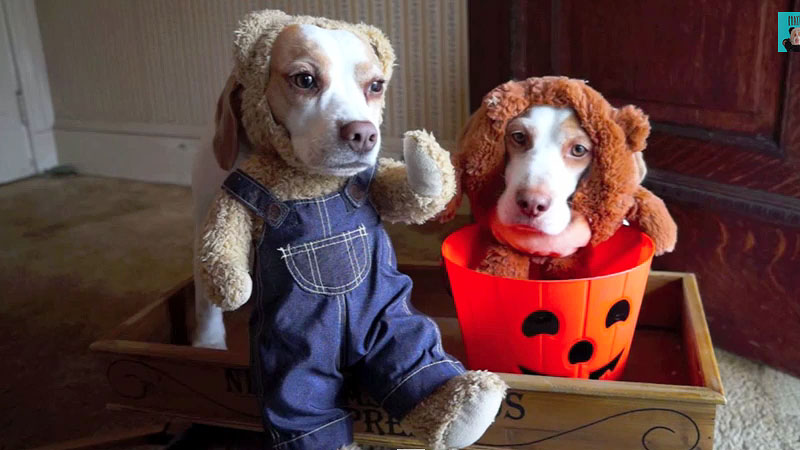 Halloween Com Costumes