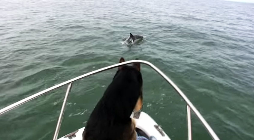 overboard maverick