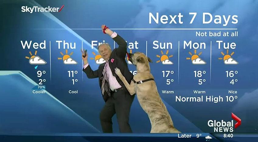 weatherman vs dog