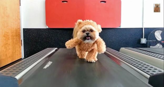munchkin treadmill