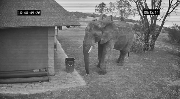 elephant picks up trash