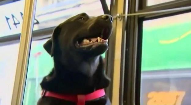 dog rides bus