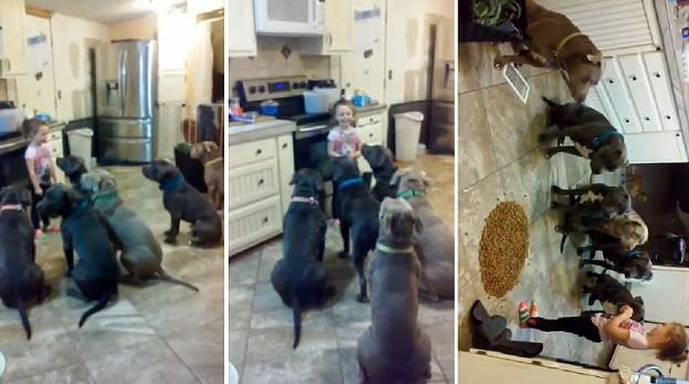girl feeds pitbulls