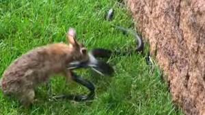 bunny-vs-snake