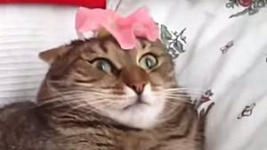 cat malfunction