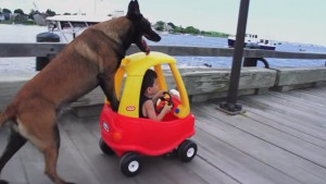 dog pushes kid car