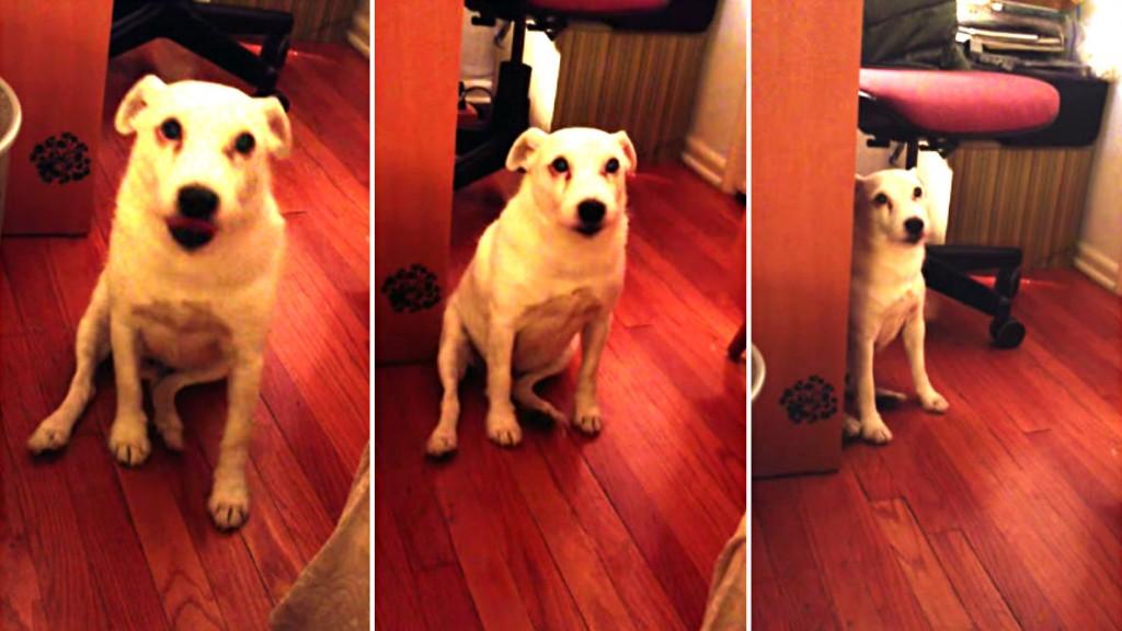 Matzo The Guilty Dog S...
