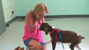 paralized dog walks