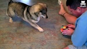 dog vs laser pointer