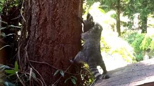 raccoon teaches baby