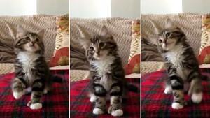 uptown kitty