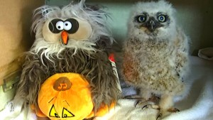 owl monster mash