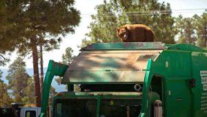bear-rides-garbage-truck