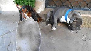 guilty-dog-hides