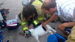 cleo-kitten-rescue-2
